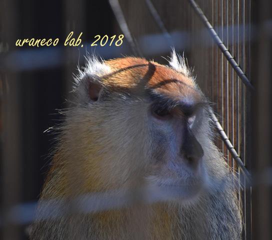 1月29日動物園5