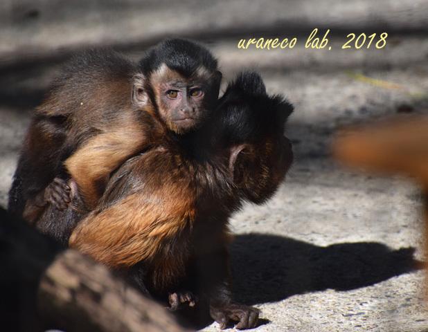 1月29日動物園3