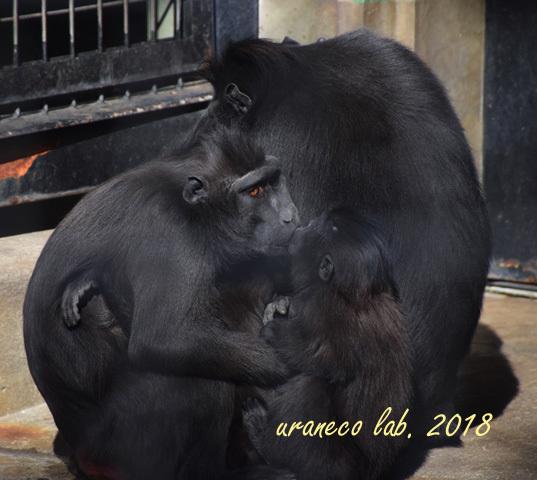 1月29日動物園4