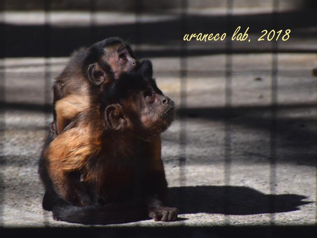 1月29日動物園2