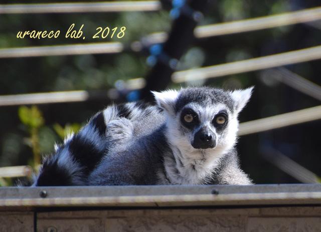 1月29日動物園