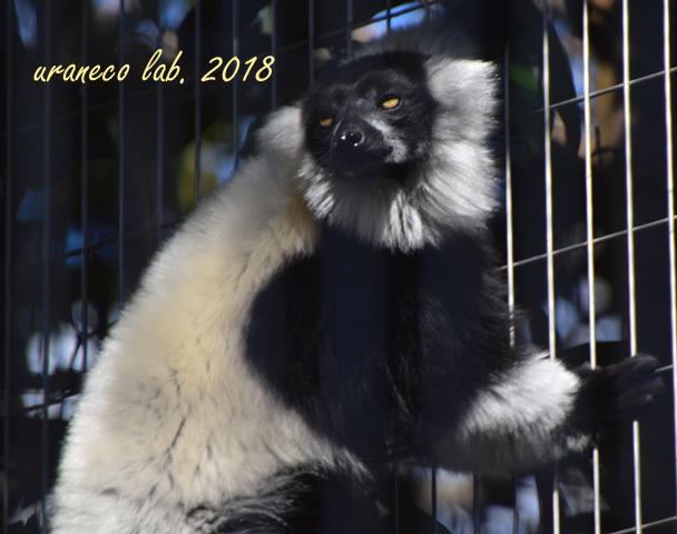 1月29日動物園6