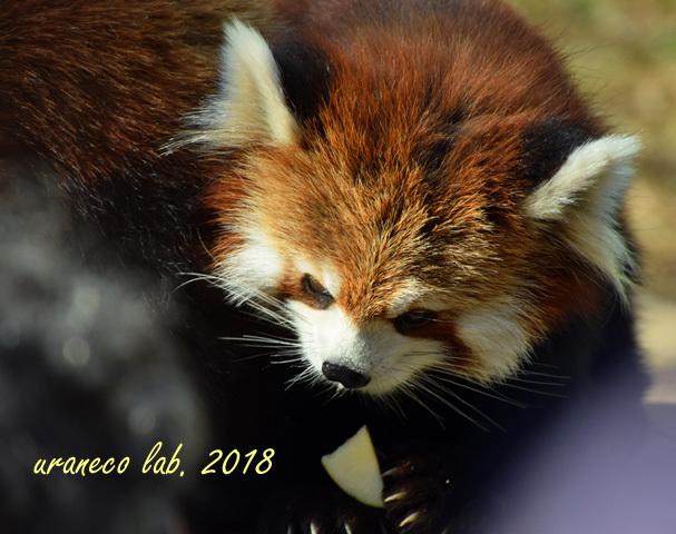 1月25日動物園3