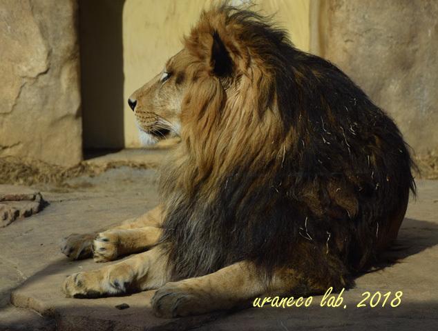 1月25日動物園6