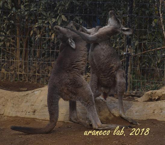 1月26日動物園2