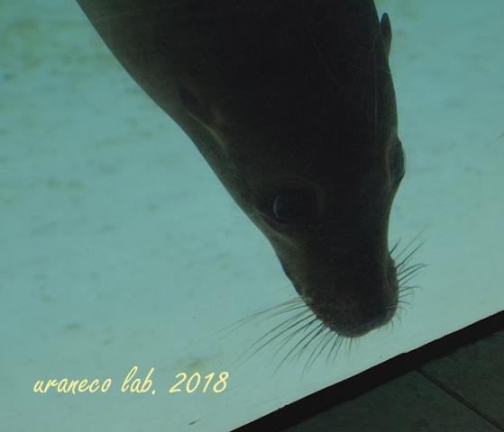 1月26日動物園8