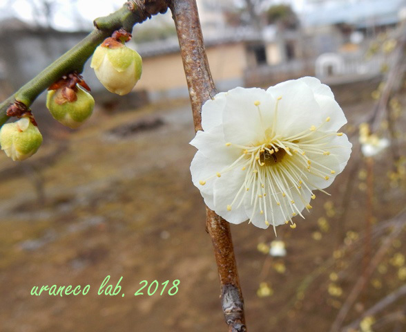 2月14日寛永寺2