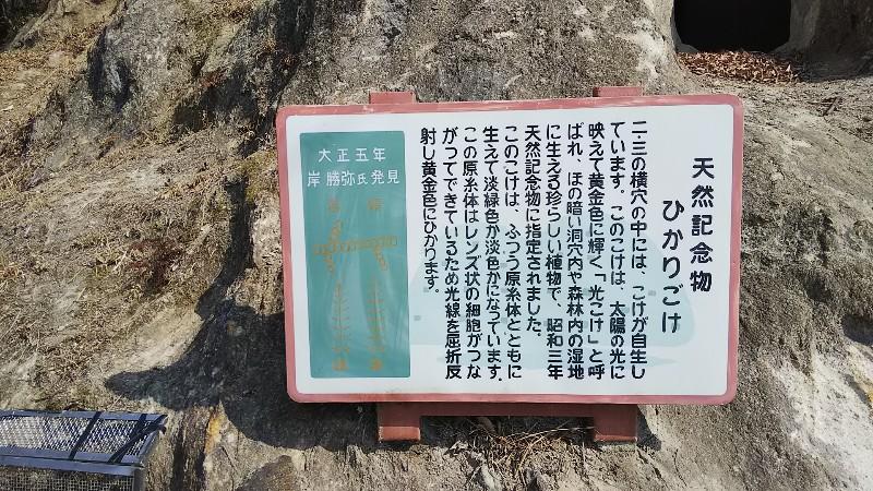 ヒカリゴケ説明201802