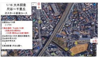 1-16tree4.jpg