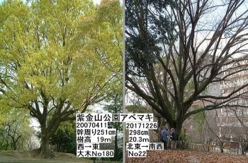 22 アベマキ大木2007年比zzaa