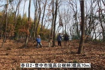 N-高台樹林