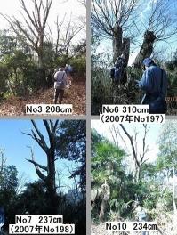 07x 045枯れ木4本組