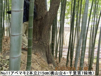 No11abe.jpg