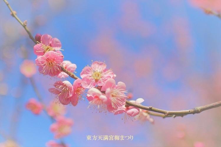 20180218東方天満宮梅まつり-2c