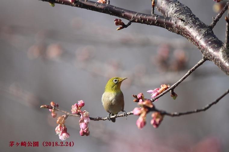 201180224茅ヶ崎公園-1a