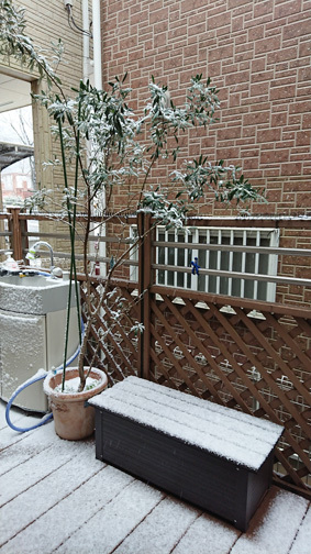 雪景色 blog