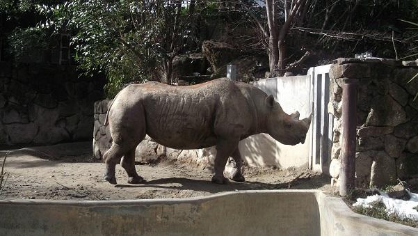 上野動物園6