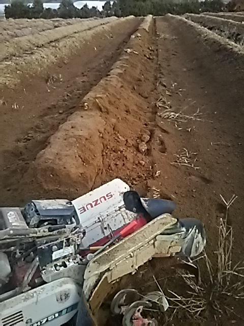 いよいよ掘る掘るw