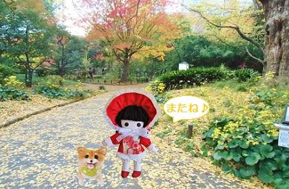 次回は日比谷公園の紅葉です