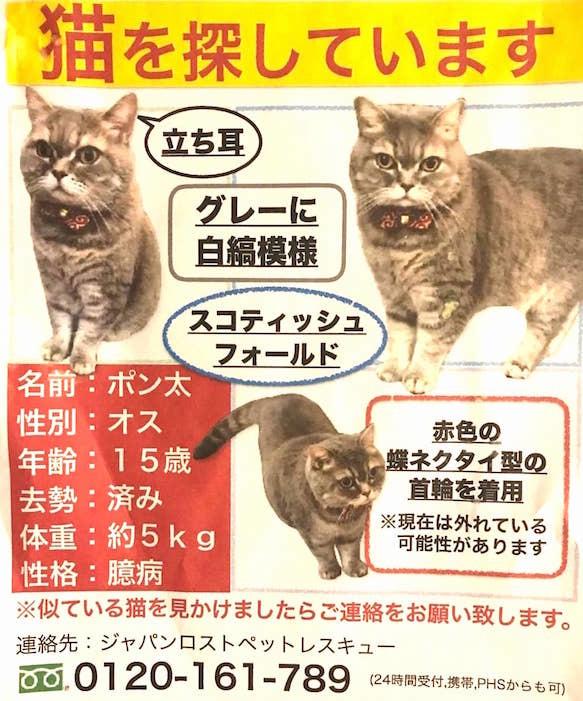迷子_ポンちゃん_スコ大田区六郷