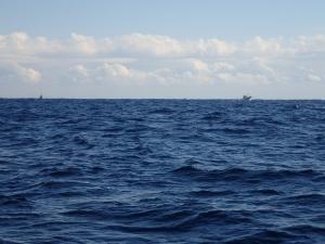 P1130015 11時8分引っ張り船うろうろ