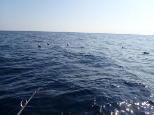 P2090013 12時ころ遊漁船消えた