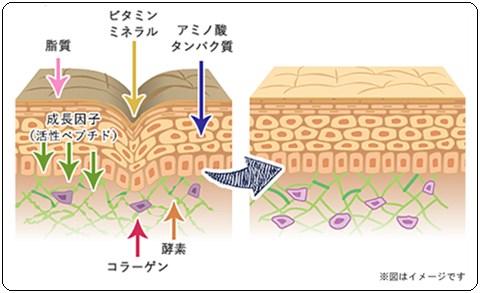 次世代最強美肌成分!細胞から修復・再生・情報伝達する!ヒト幹細胞&バージンプラセンタ美容液【ヴァイナス】口コミ。
