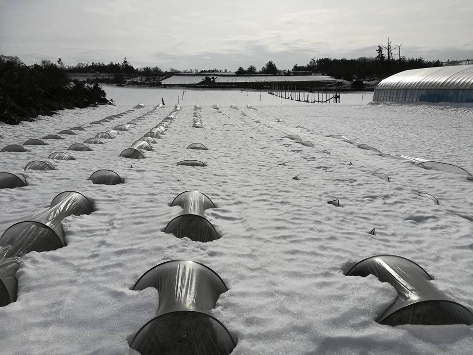 雪解けの様子2