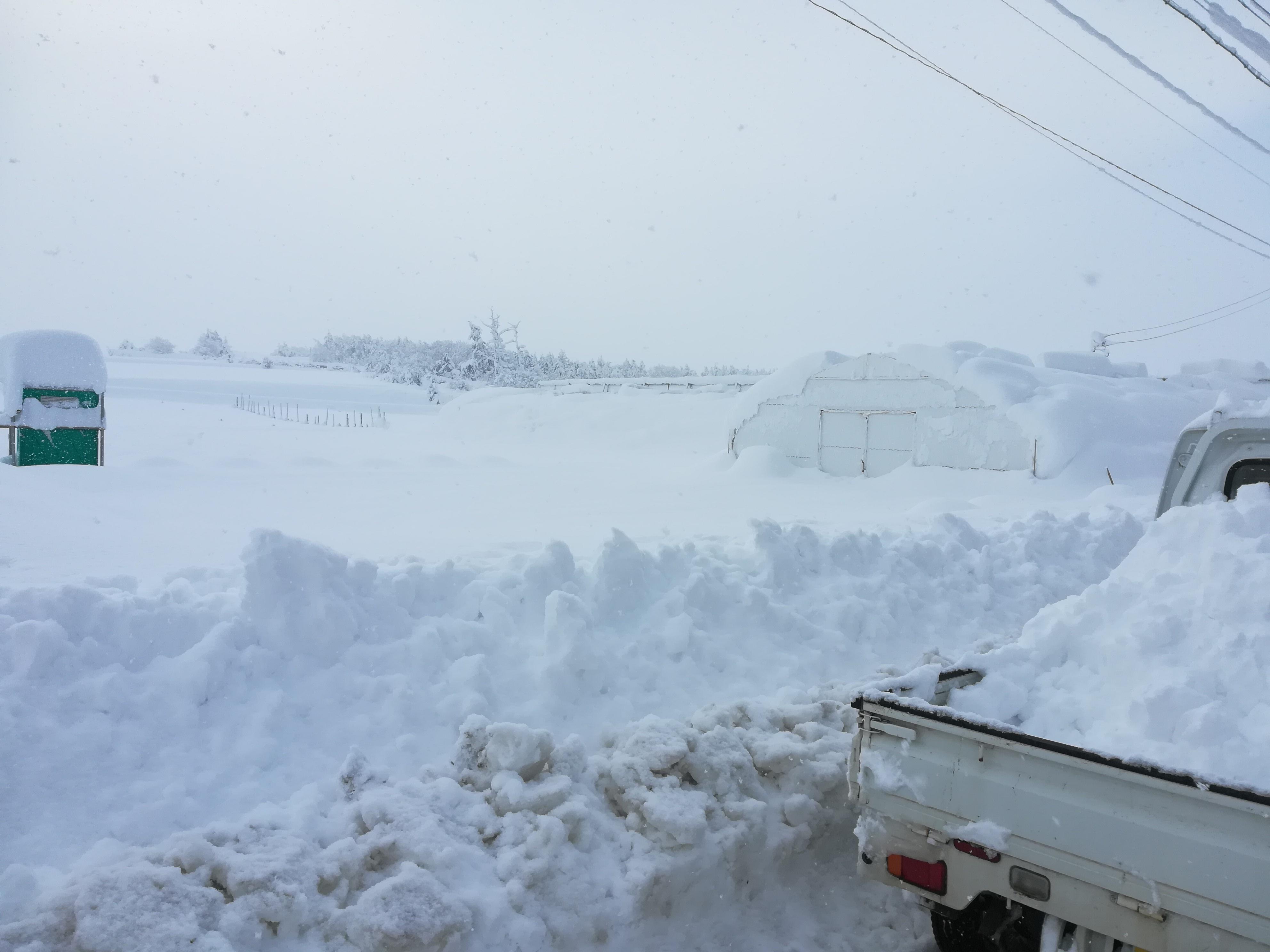 積雪の様子_畑