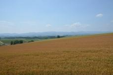 美瑛の丘の景色