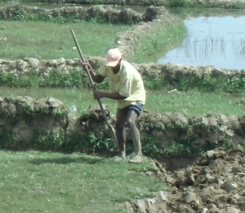 マダガスカルの鋤と利用2