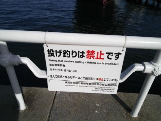横浜方面で釣り (7)