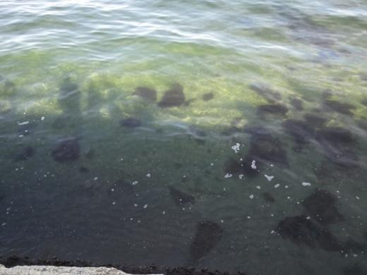 横浜方面で釣り (10)