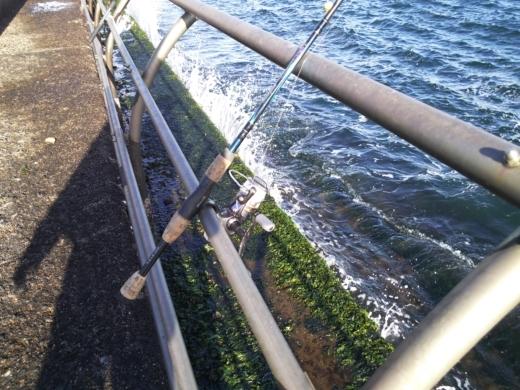 横浜方面で釣り (26)