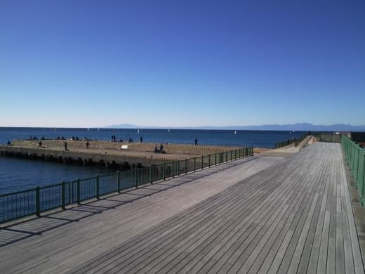 葉山港釣り (17)