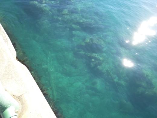 葉山港釣り (18)
