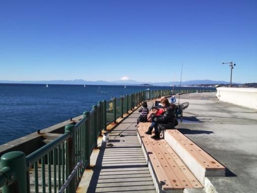 葉山港釣り (21)