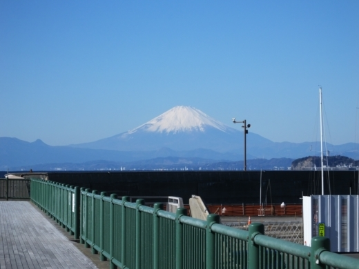 葉山港釣り (1)