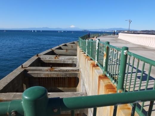 葉山港釣り (3)