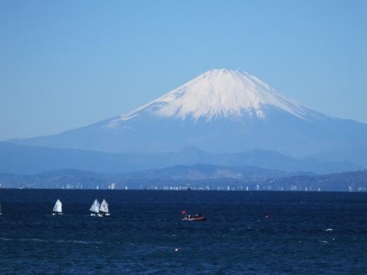 葉山港釣り (5)