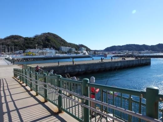 葉山港釣り (6)