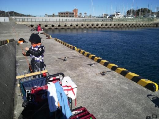 葉山港釣り (24)
