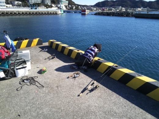 葉山港釣り (25)