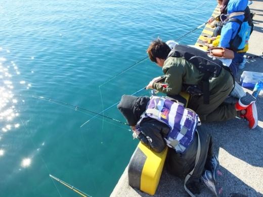 葉山港釣り (7)