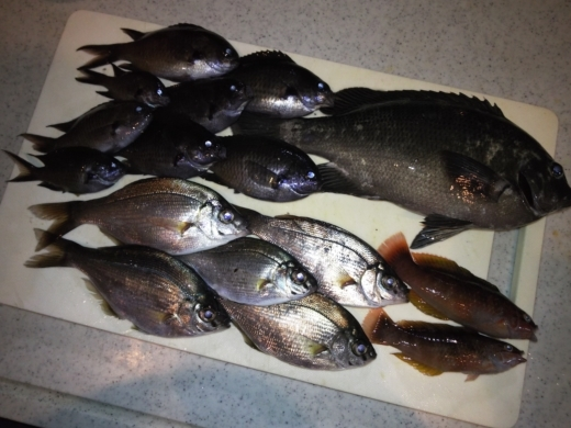 葉山港釣り (39)