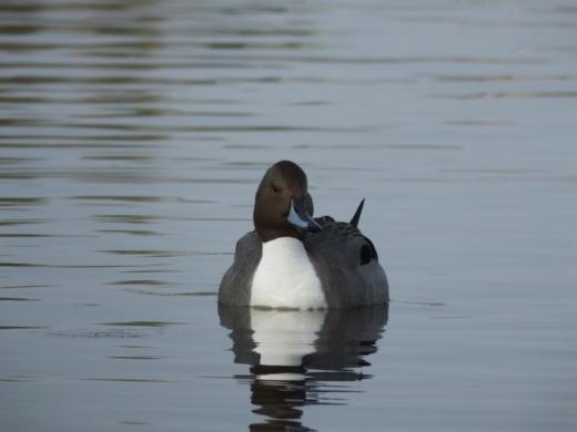 水鳥 (9)