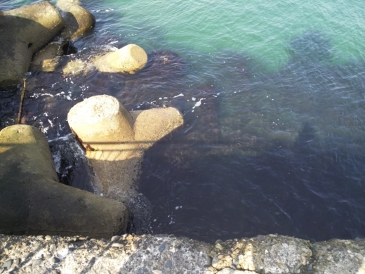 鹿島海釣園 (13)