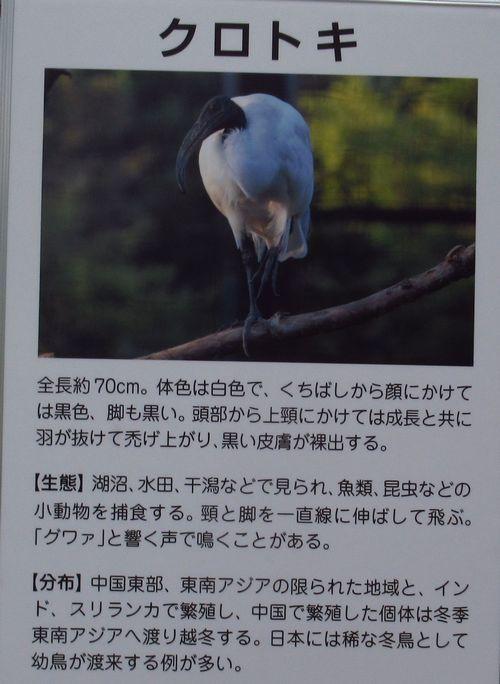 トキの森13