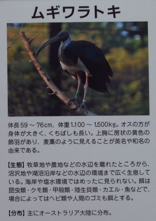 トキの森14