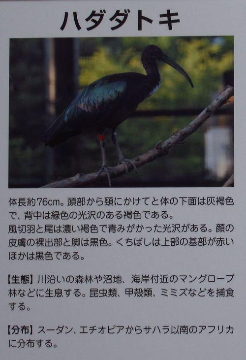 トキの森15